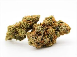 Fleurs de CBD - Blueberry Muffin - SCBD Lab bud