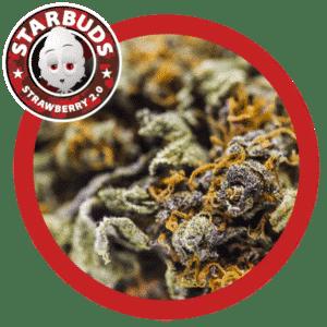 Fleurs de CBD - Strwbry 2.0 - Starbuds