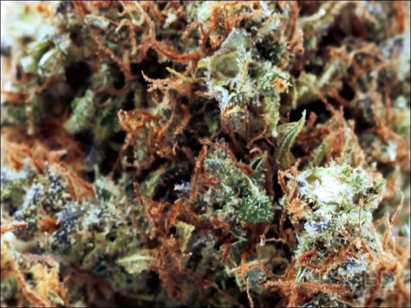 Fleurs de CBD - New York Diesel - SCBD Lab zoom