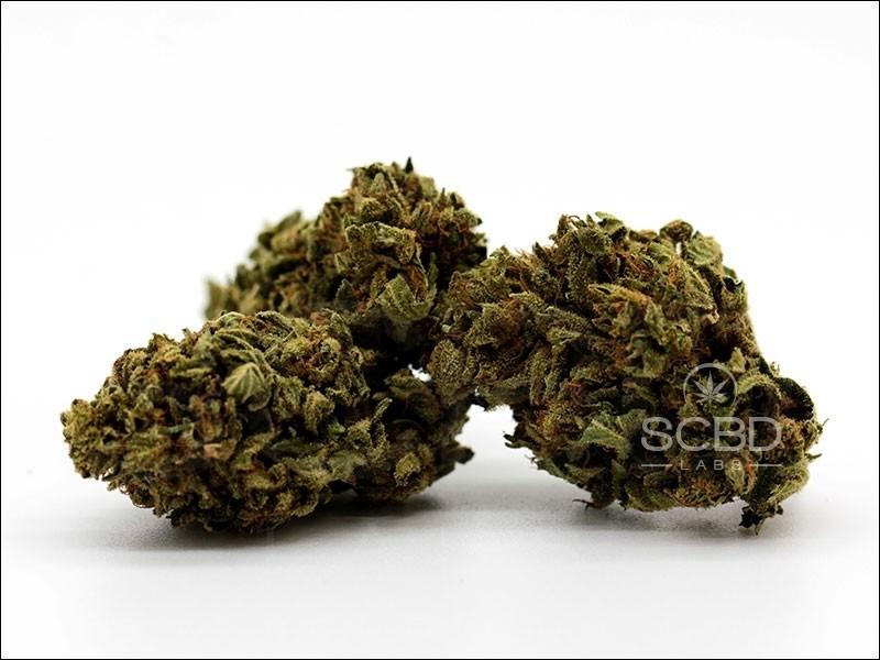 Fleurs de CBD - Strawberry Cheese - SCBD Lab buds