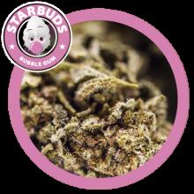 Fleurs de CBD - Bubblegum - Starbuds